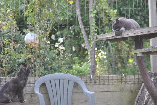 Kitty Cat, née le 1er août 2010 STATUT :CHAT LIBRE Dsc_0102