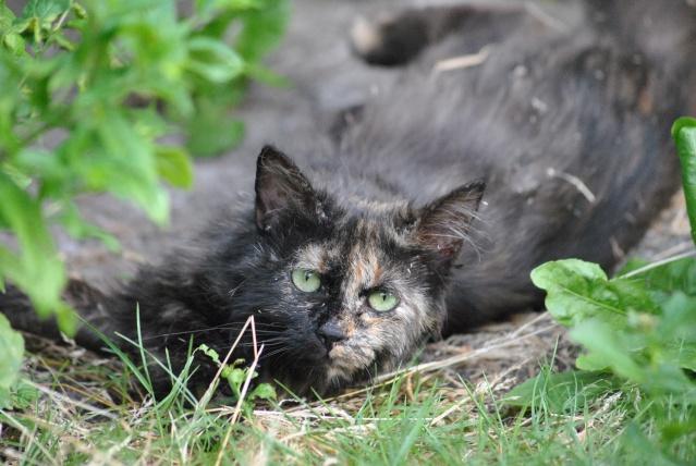 Kitty Cat, née le 1er août 2010 STATUT :CHAT LIBRE Dsc_0103