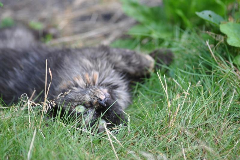 Kitty Cat, née le 1er août 2010 STATUT :CHAT LIBRE Dsc_0104