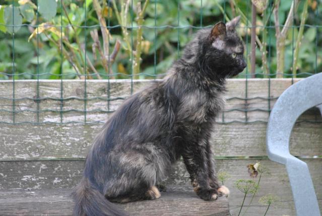 Kitty Cat, née le 1er août 2010 STATUT :CHAT LIBRE Dsc_0105