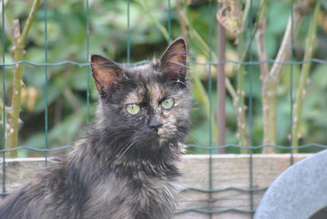 Kitty Cat, née le 1er août 2010 STATUT :CHAT LIBRE Dsc_0200