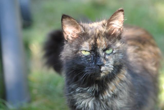 Kitty Cat, née le 1er août 2010 STATUT :CHAT LIBRE Dsc_0201