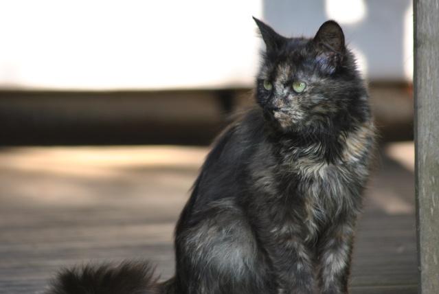 Kitty Cat, née le 1er août 2010 STATUT :CHAT LIBRE Dsc_0202