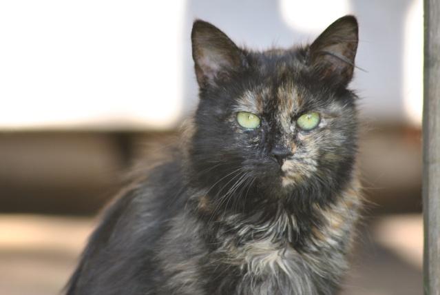 Kitty Cat, née le 1er août 2010 STATUT :CHAT LIBRE Dsc_0203