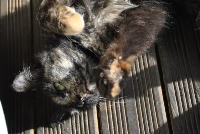 Kitty Cat, née le 1er août 2010 STATUT :CHAT LIBRE - Page 2 Dsc_0211