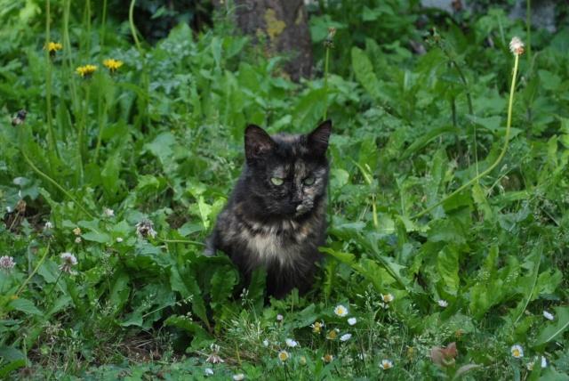 Kitty Cat, née le 1er août 2010 STATUT :CHAT LIBRE - Page 2 Dsc_0212