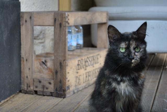 Kitty Cat, née le 1er août 2010 STATUT :CHAT LIBRE - Page 2 Dsc_0213
