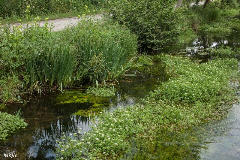 une petite rivière 221_pi10
