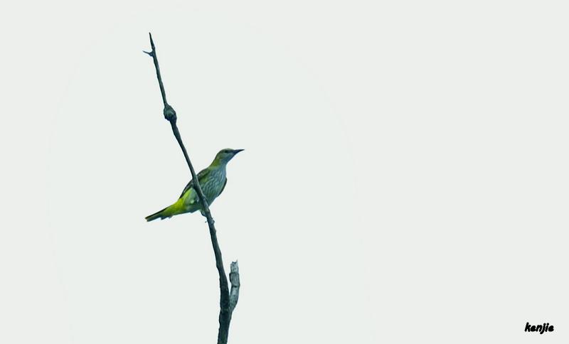 mon abc des oiseaux - Page 4 55_lor10