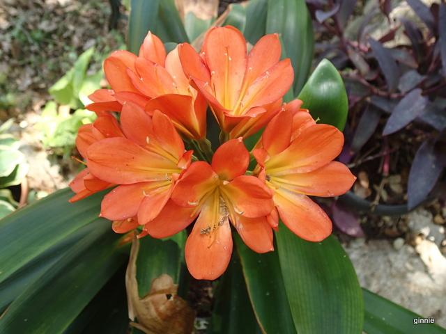 Floraisons d'intérieur  - Page 5 P6182122