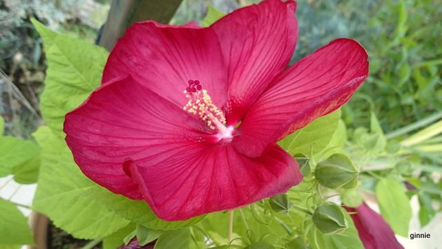 Floraisons du mois d'Août - Page 10 P7222217