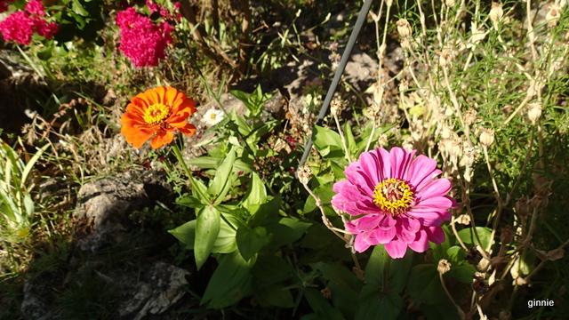 Floraisons du mois d'Août - Page 10 P7222218