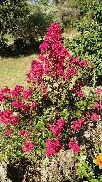 Floraisons du mois d'Août - Page 10 P7222219