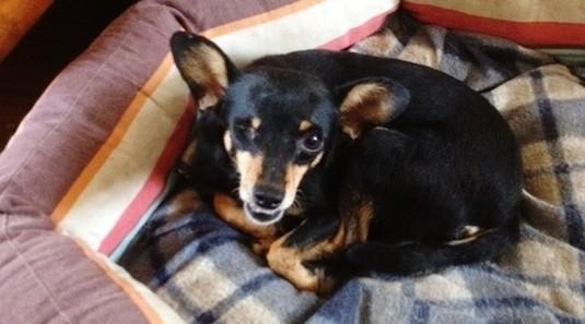 Lola, petite martyre 3ans - 4 kgs  // Adoptée ! Lola110