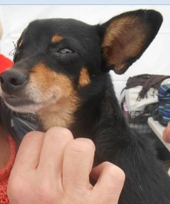 Lola, petite martyre 3ans - 4 kgs  // Adoptée ! Lola210