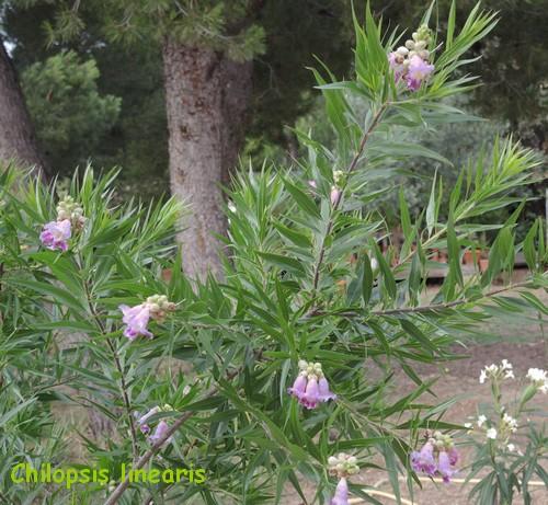 butinages du jour à l'ombre de nos plantes  - Page 2 Dscn4823