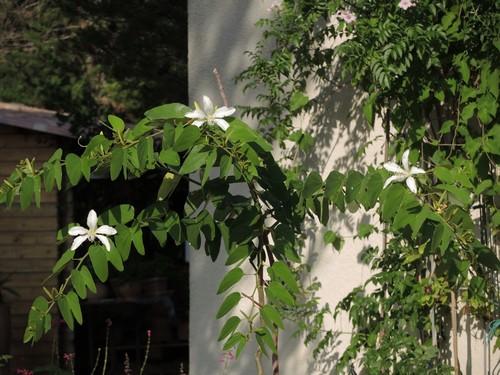 butinages du jour à l'ombre de nos plantes  - Page 3 Dscn4912