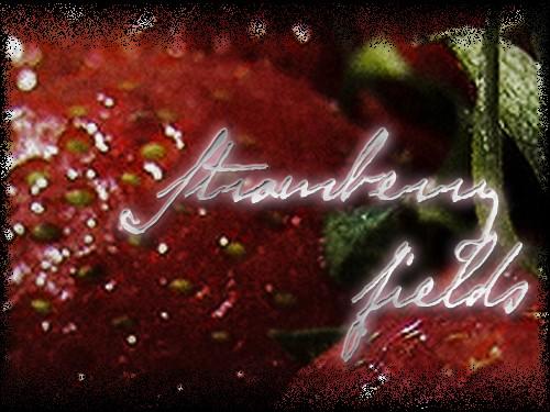 Strawberry fields Strawb10