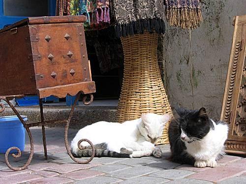 Les Chats d'Essouira 15060010