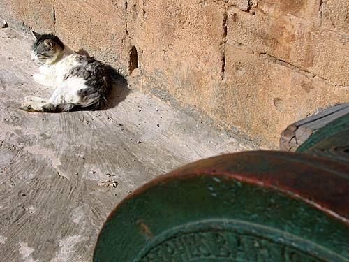Les Chats d'Essouira 15070210