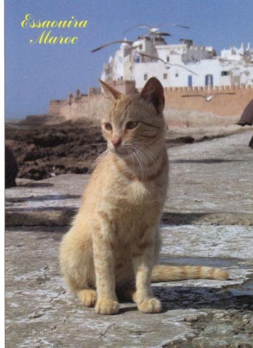 Les Chats d'Essouira 23-01-18