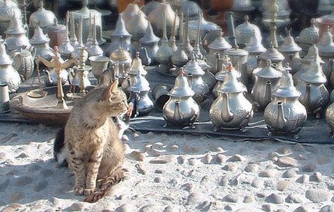 Les Chats d'Essouira Al-1610