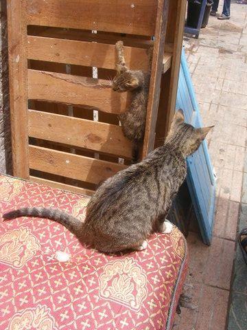 Les Chats d'Essouira Dscf1610
