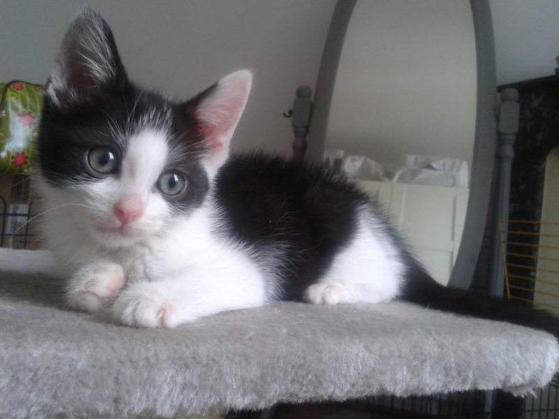 Livy, femelle, 10.05.2015, noir et blanche 211