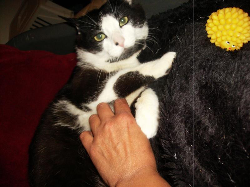 HORUS, mêle type Européen noir et blanc né en juillet 2012 Hpim3613