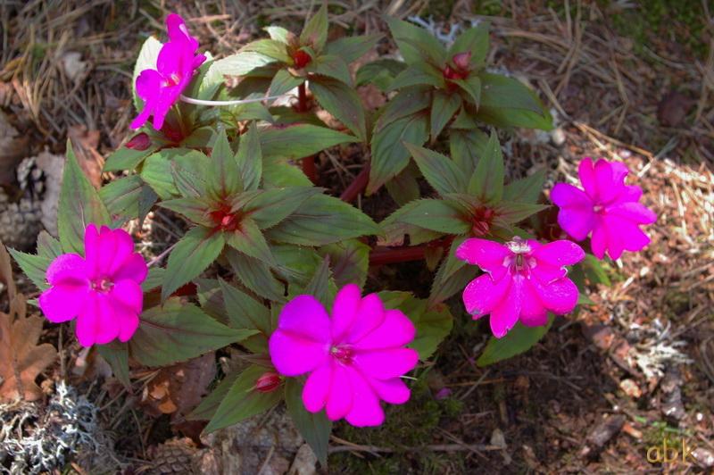 Fleurs sur le mur païen Fleurs10