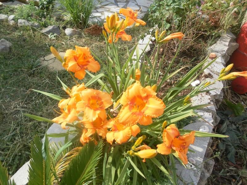 le jardin de syljou - Page 2 Sam_3611