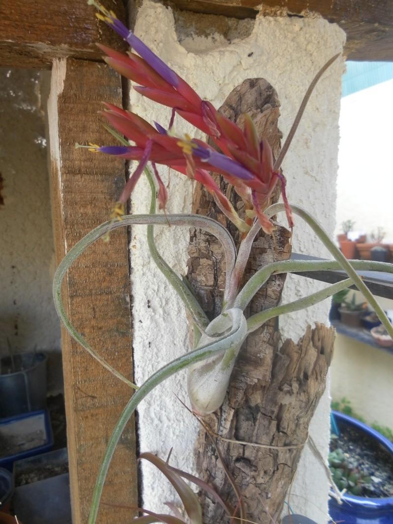 le jardin de syljou - Page 2 Sam_3612
