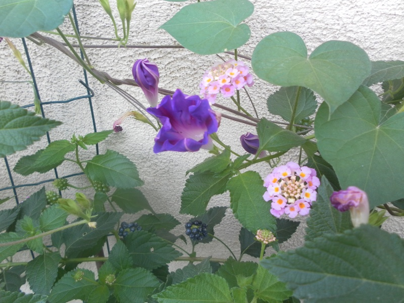 le jardin de syljou - Page 2 Sam_3625