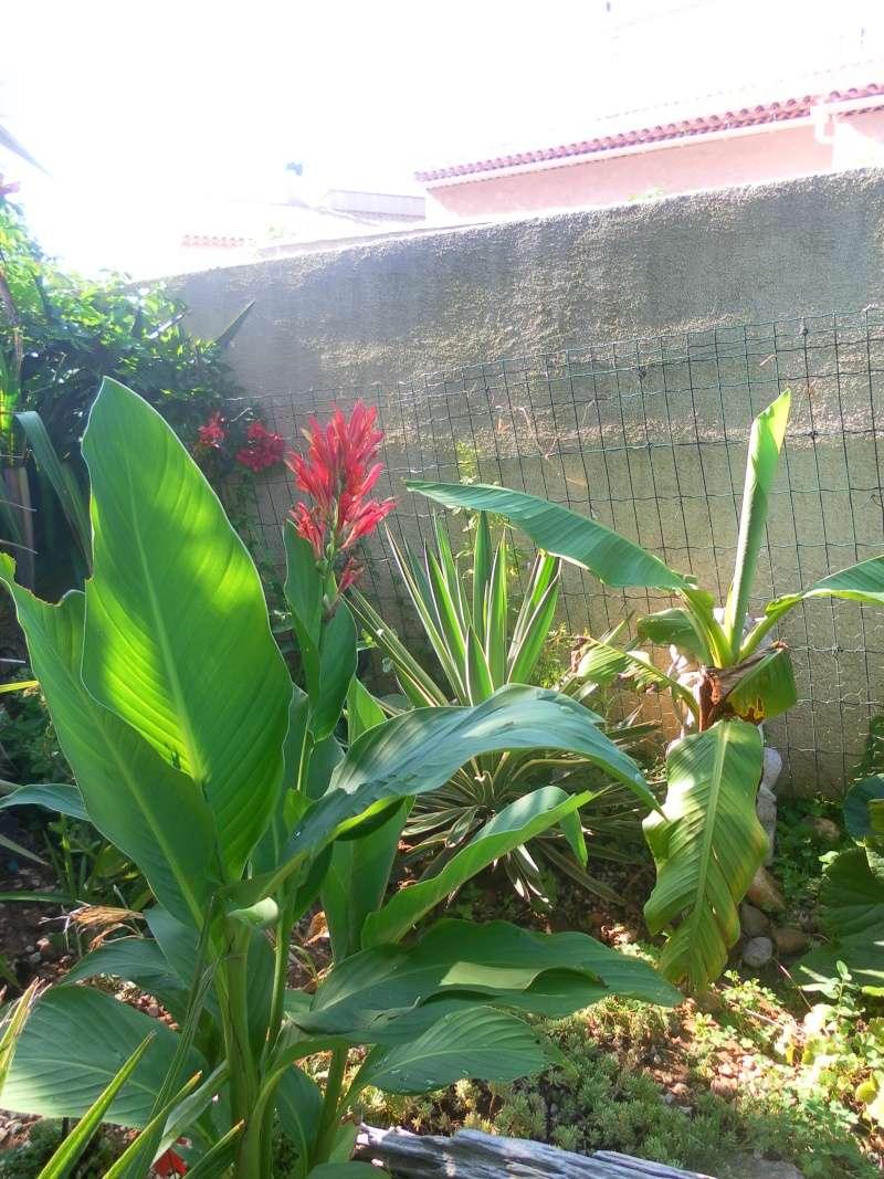 le jardin de syljou - Page 2 Sam_3710