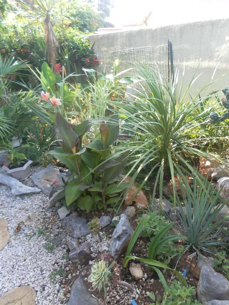 le jardin de syljou - Page 2 Sam_3714