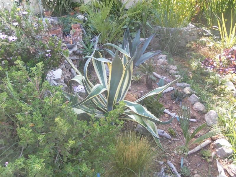 le jardin de syljou - Page 2 Sam_3715