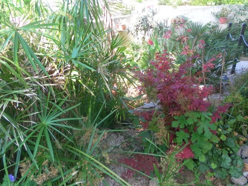 le jardin de syljou - Page 2 Sam_3716