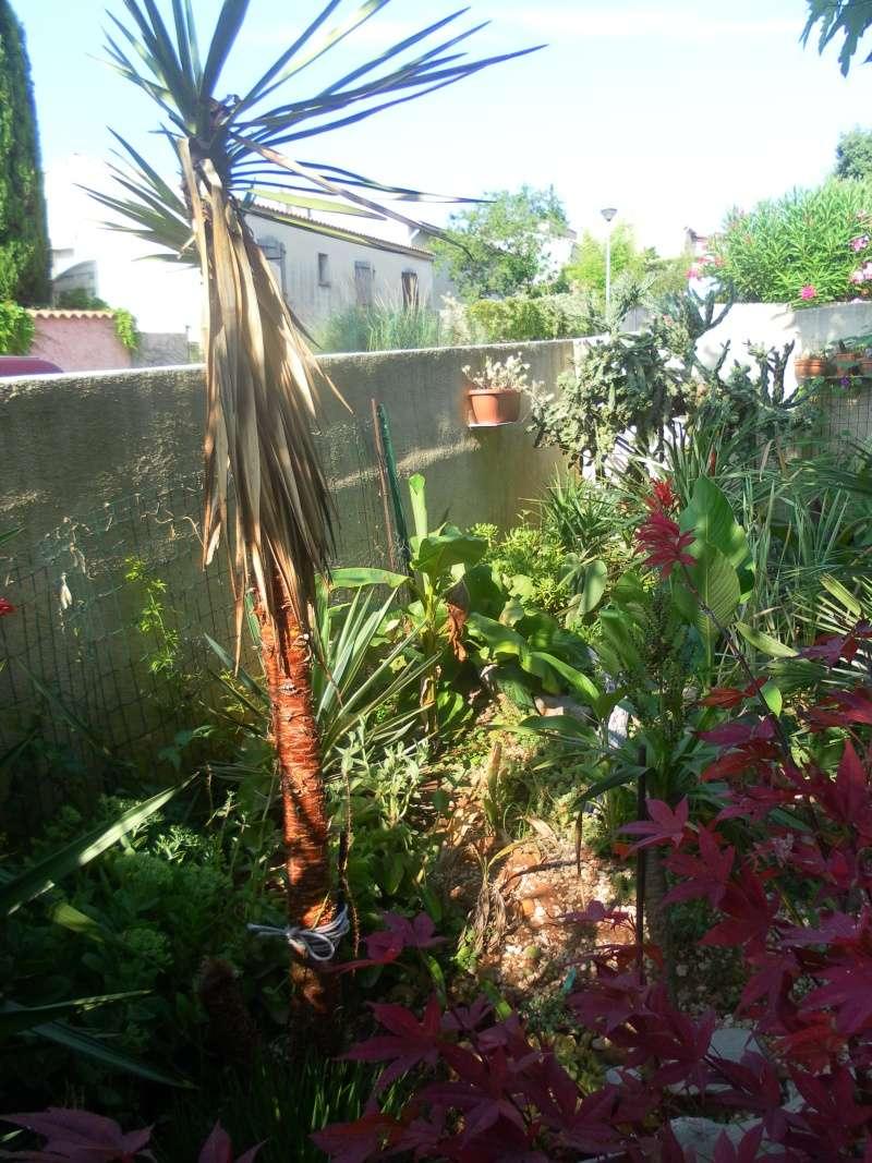le jardin de syljou - Page 2 Sam_3717
