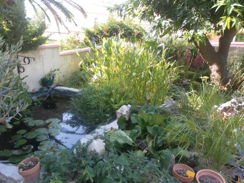 le jardin de syljou - Page 2 Sam_3718