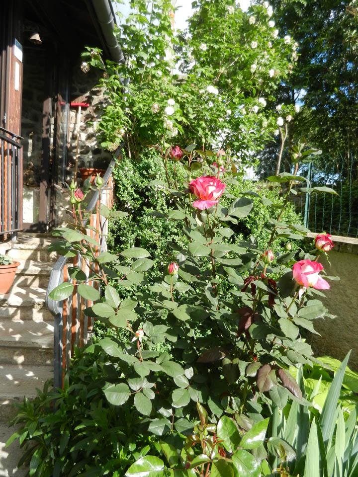Evolution de nos jardins !!! Dscn5810