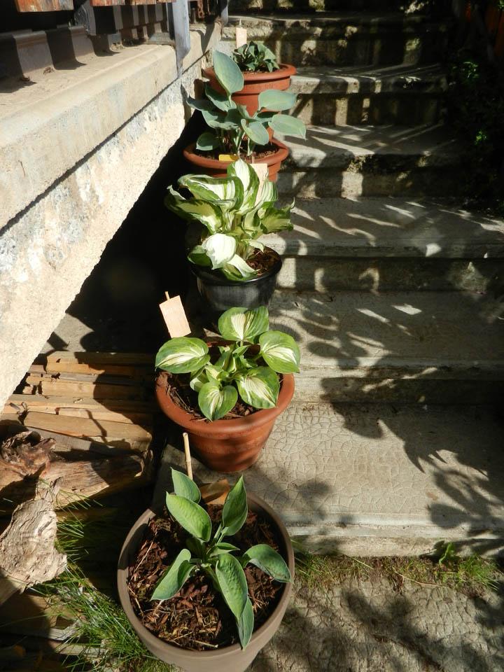 Evolution de nos jardins !!! Dscn5812