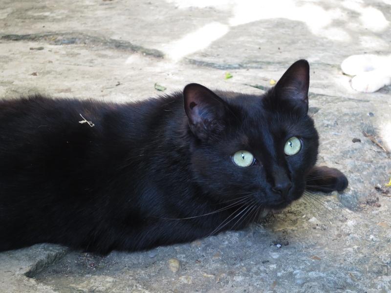Perdu chat noir - Centre ville de Plaisance du Touch Img_0714