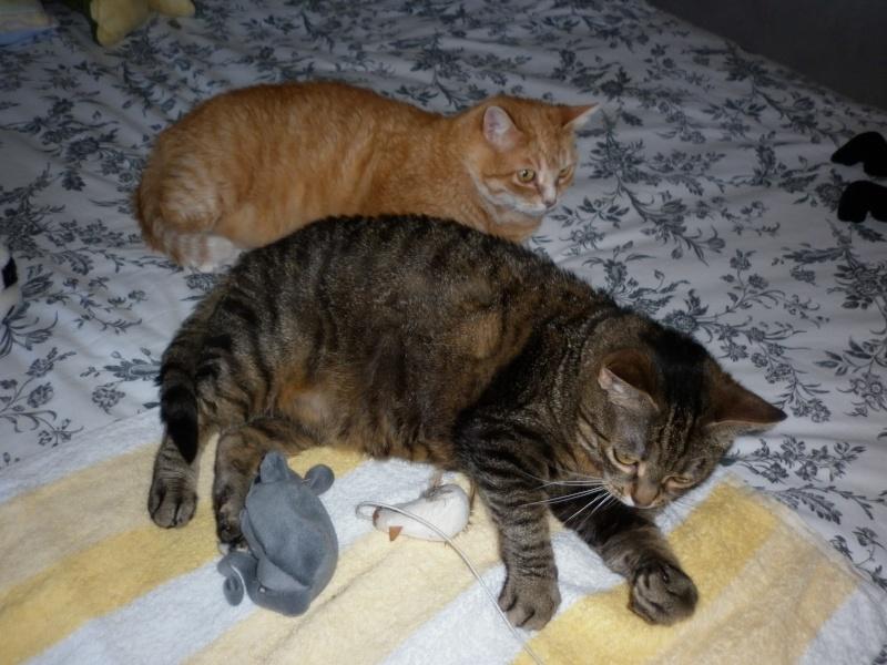 Lili et Jila P1020910