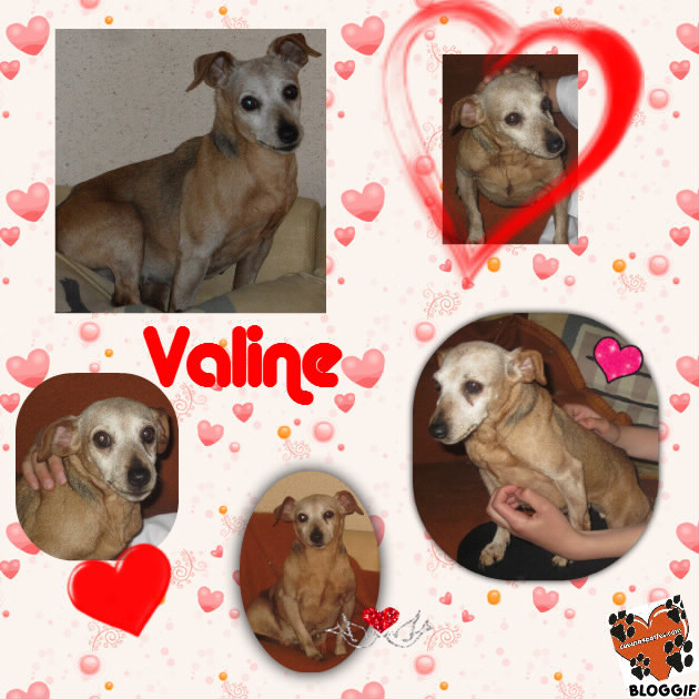 VALINE  Pinsher Femelle née en 2004 (58) COEUR 4P - Page 6 Bloggi10