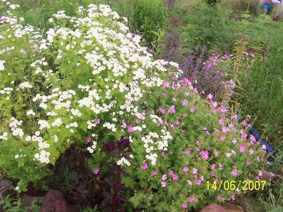 les plantes que je propose 100_1310