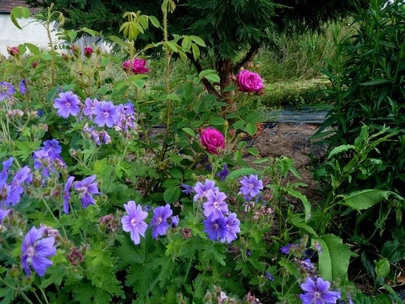 les plantes que je propose Fleurs12