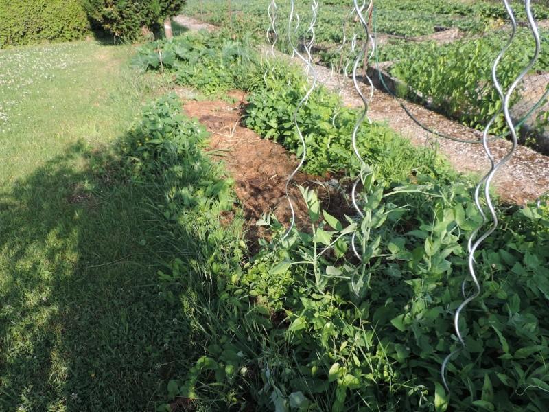 Evolution de nos jardins !!! Dscn2210