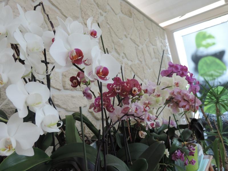 Evolution de nos jardins !!! Dscn2310