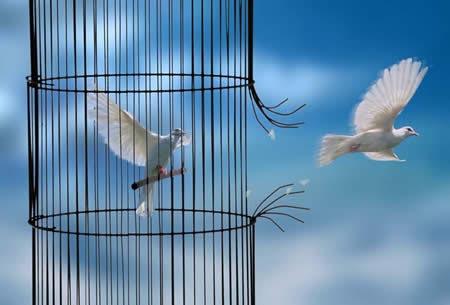 Liria eshte natyra e vertete e qenies sone The-lo12