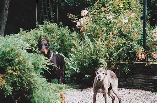 Les chiens de vos rêves en photos! - Page 2 Lais110